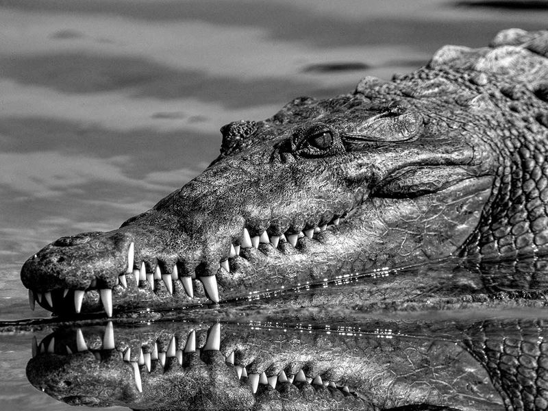 250 alligators removed from Disney since boy died in 2016 attack