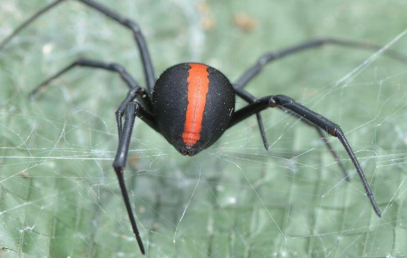 Pest control 27
