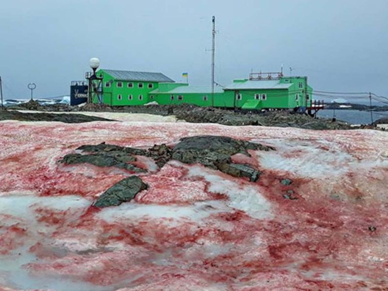 Antarctica blood nsow