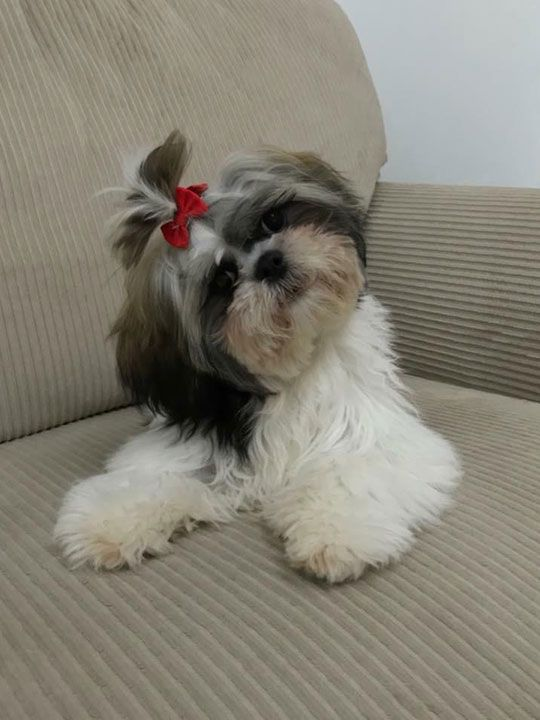 Filipina Dog