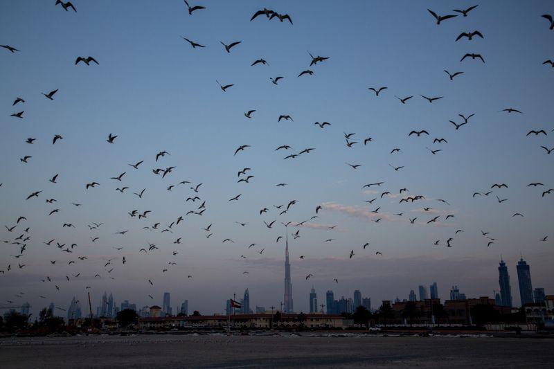 Copy of 20 Dubai Skyline 2015 [1]-1583226800111