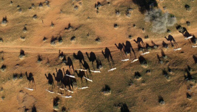 desert guide 7