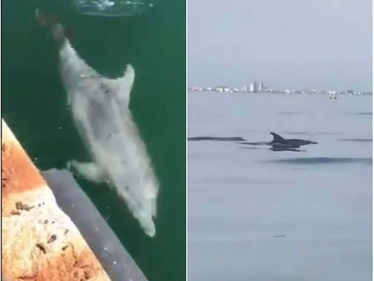 Dolphins in Venice