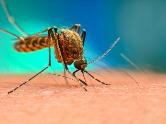 OPN 200320 Mosquitoes-1584695441904
