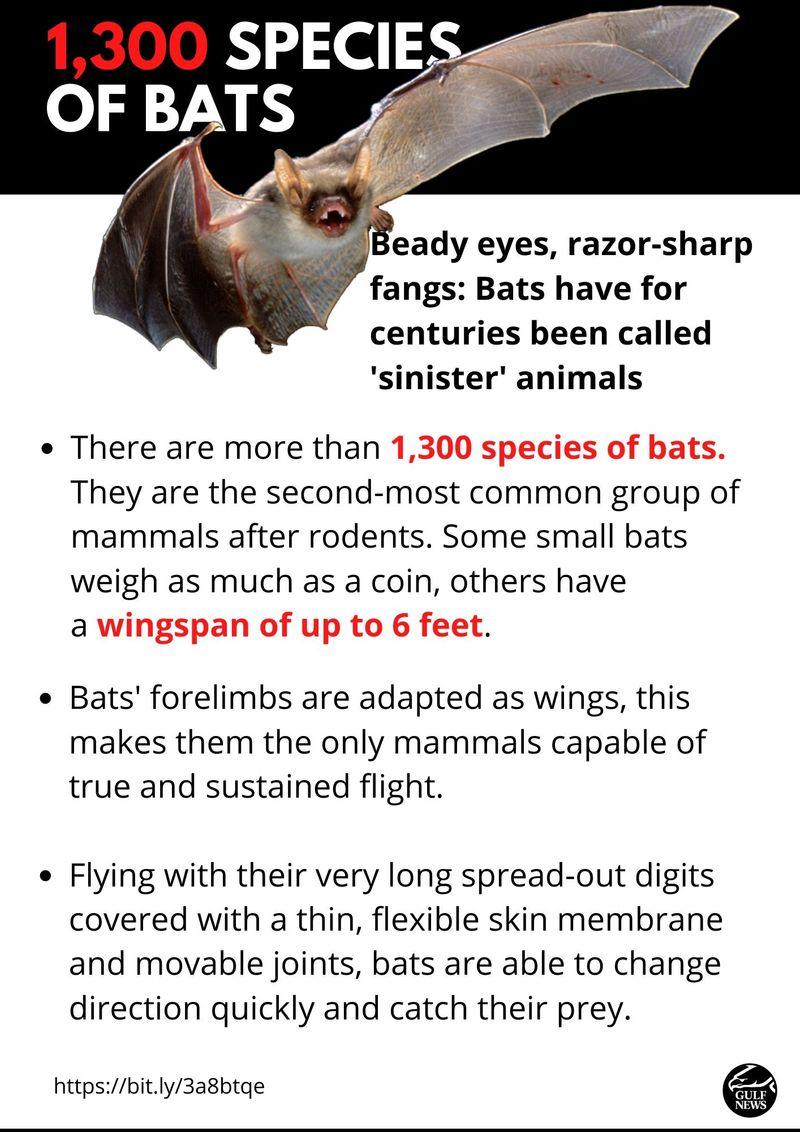 1,3000 species bats
