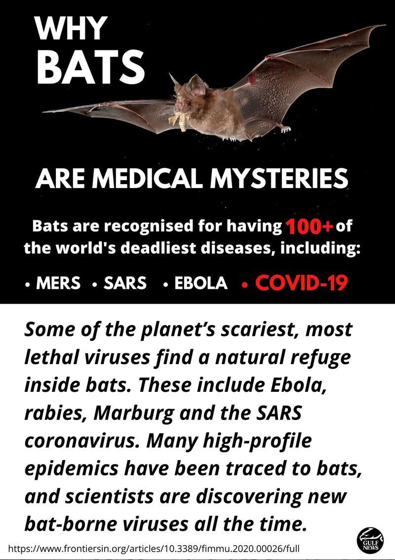 Bats medical mysteries