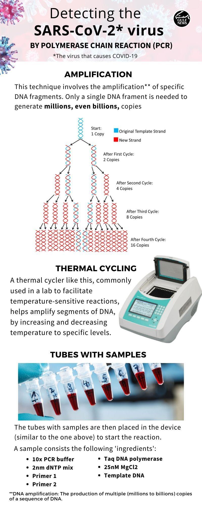 PCR 01