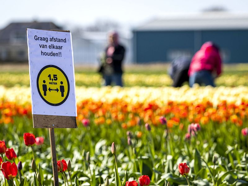 A sign warns visitors to keep 1,5 meters distance as tourists visit a flowering bulb fields in Lisse.