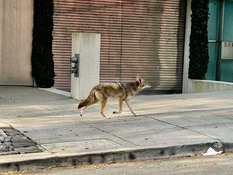 Animals on street