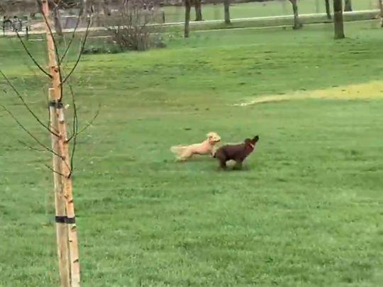 Nick Heath commentates on dogs playing in the park
