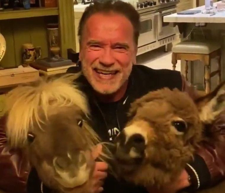 TAB 200329 Arnold Schwarzenegger two ponies-1585488863203