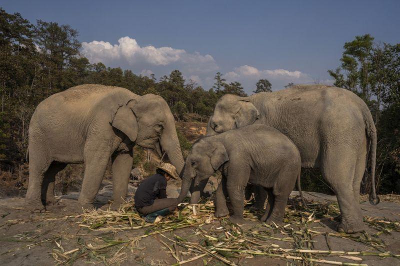 Copy of THAILAND-ELEPHANTS-1-1585733982970