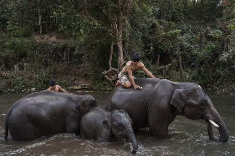 Copy of THAILAND-ELEPHANTS-10-1585733986313