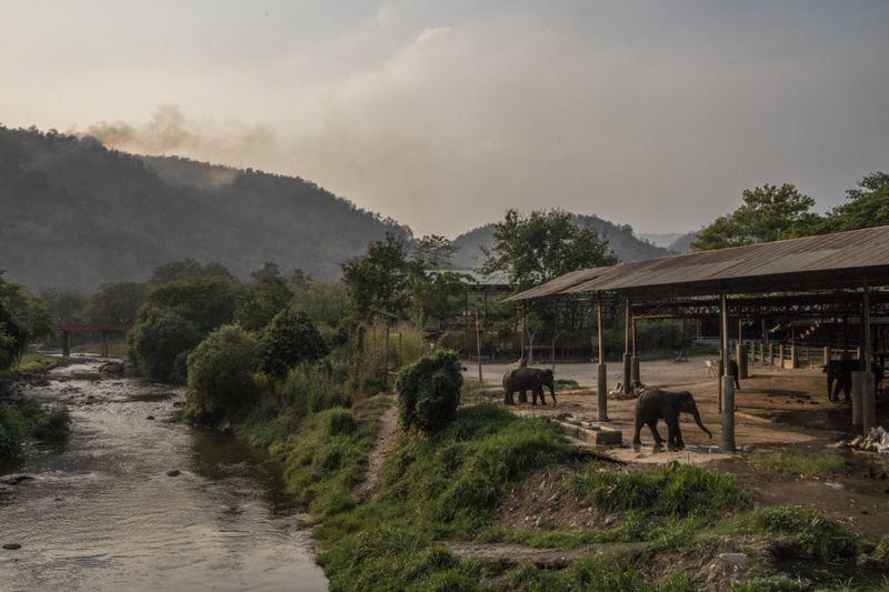 Copy of THAILAND-ELEPHANTS-5-1585733976411