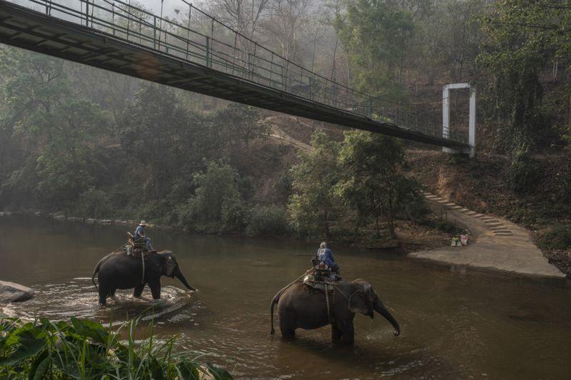 Copy of THAILAND-ELEPHANTS-6-1585733979404