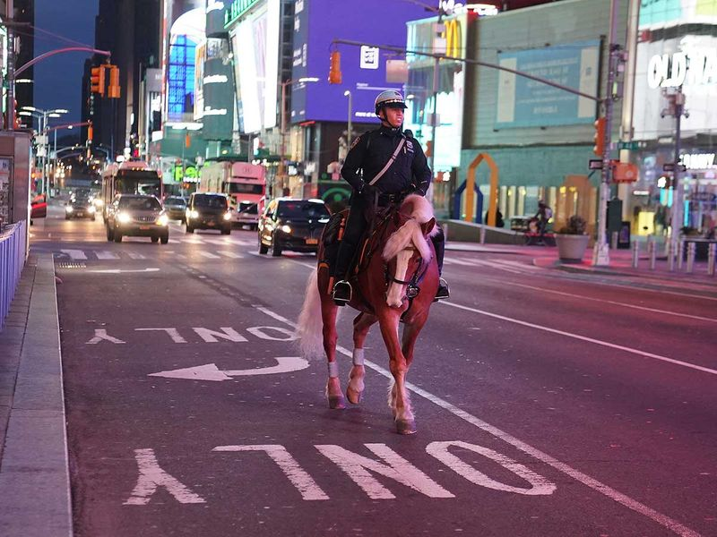 New York mounted police