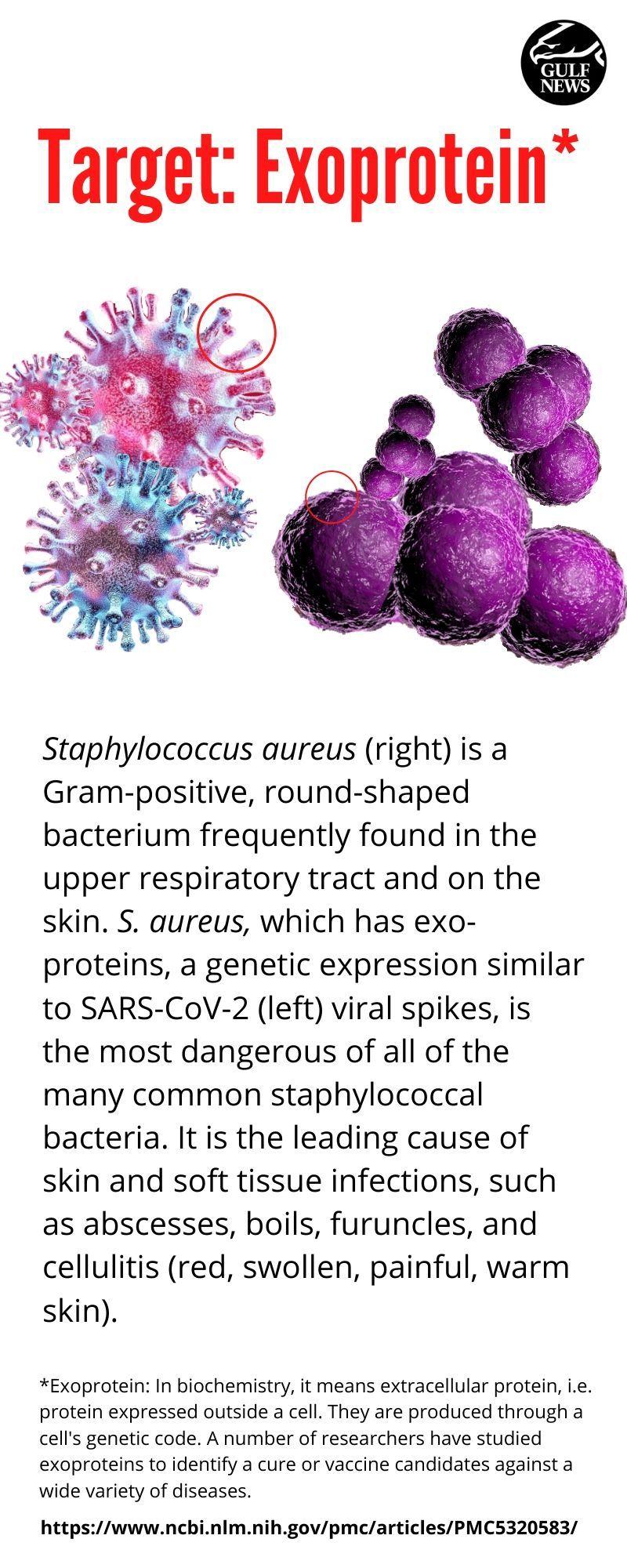Exoprotein