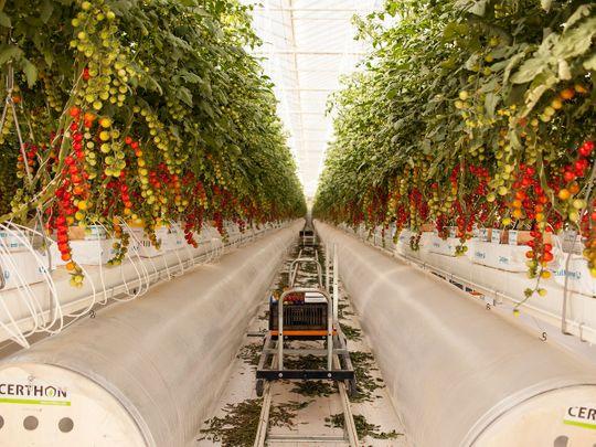 Pure Harvest farm