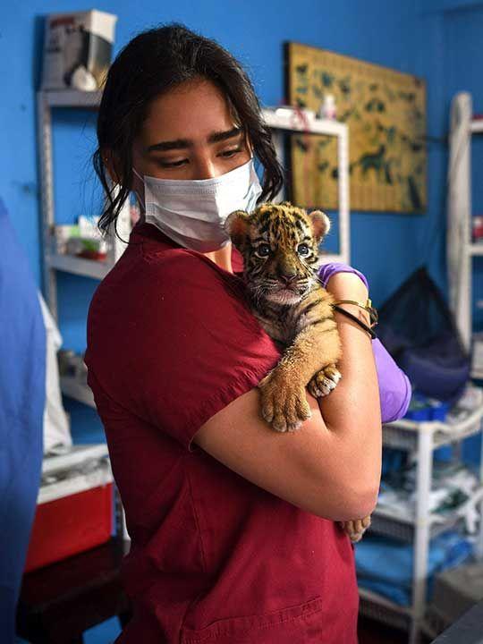 200407 tiger covid