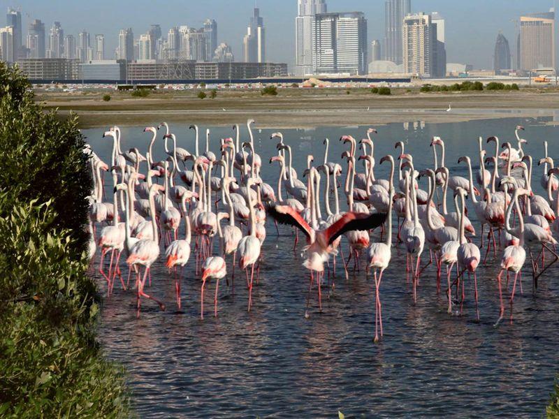 BC Ras Al Khor Wildlife Sanctuary
