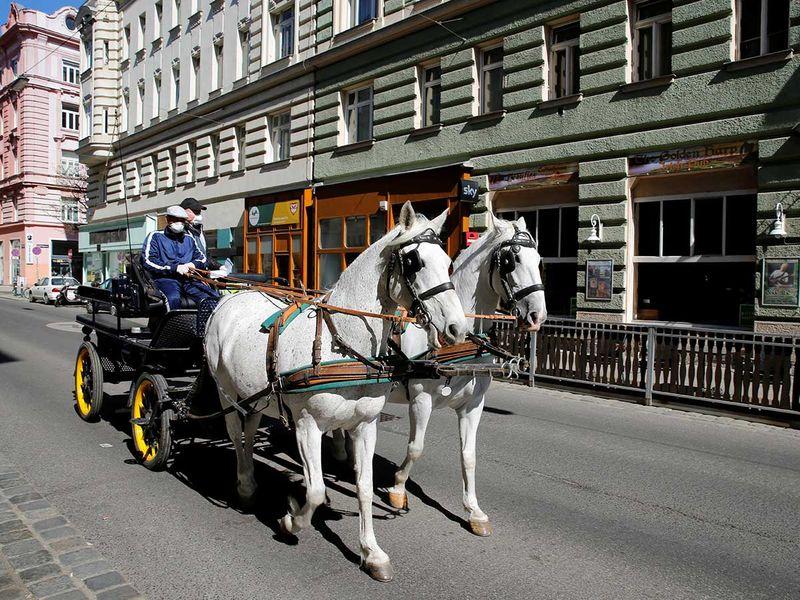 Horse carriage Austria