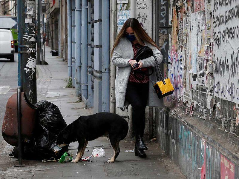 200411 stray dog