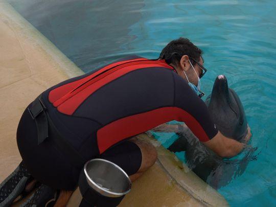Atlantis Dubai's marine animals