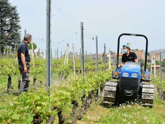 Italy crops