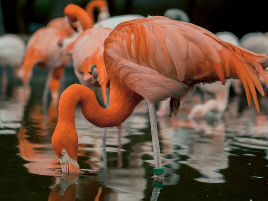 Flamingos turn wetland pink as, India stays under lockdown from COVID-19