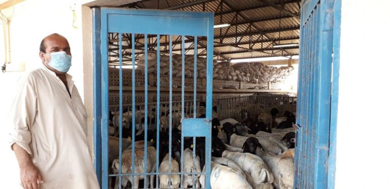NAT 200423 Livestock-1587637403009