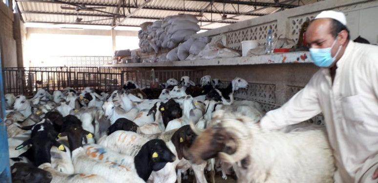 NAT 200423 Livestock1-1587637404879