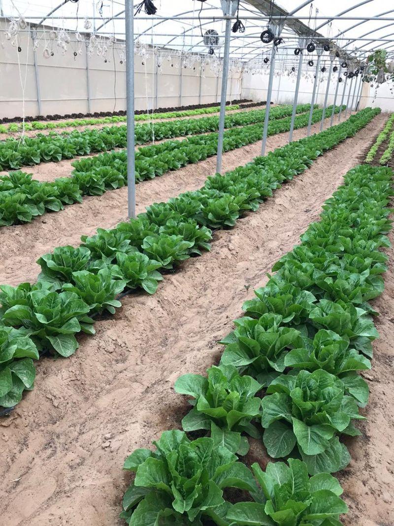 FTC_Rashed Organic Farm 002-1588150162149