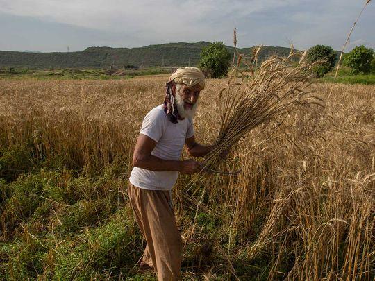 Pakistan farmer coronavirus crops