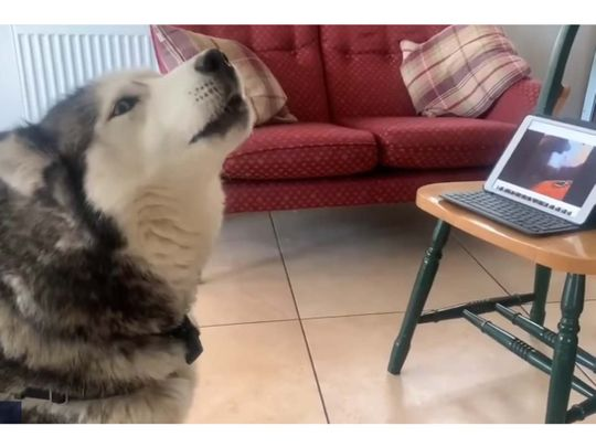 Henri and Laika video chat