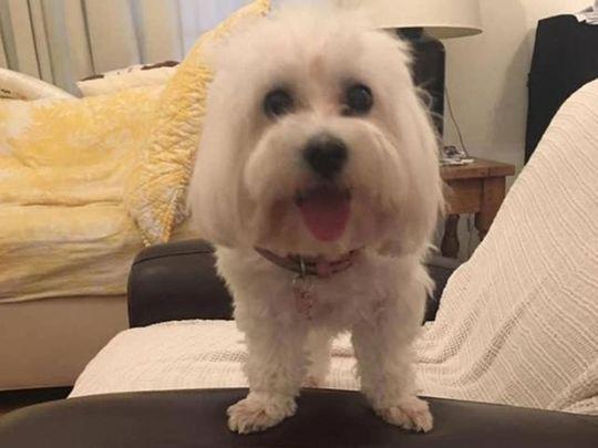 Mia Meng Meng's pet dog Emily