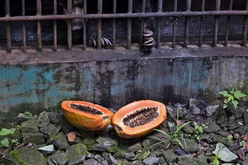 Copy of Virus_Outbreak_Indonesia_Zoo_Photo_Gallery_96715.jpg-c2c08~2-1589012381168
