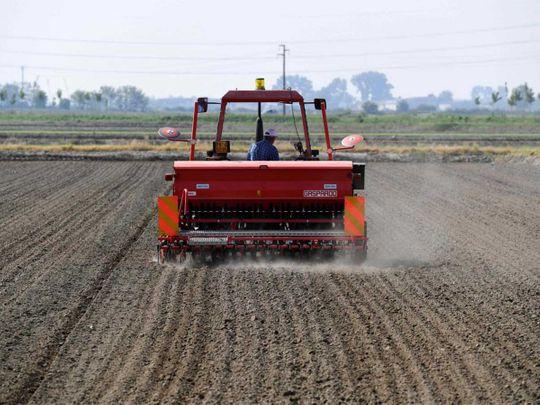 20200511 rice plantation