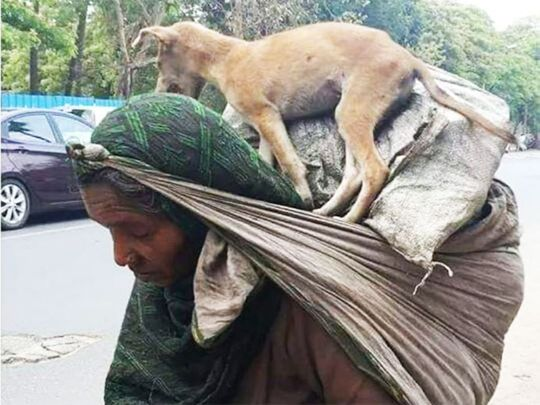 Indian migrant worker carries tired pet on her shoulders