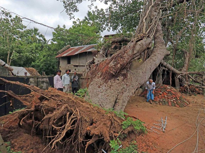 Birbhum: People stand near a banyan tree that fell on a house during Cyclone 'Amphan at Layekbazar in Birbhum district