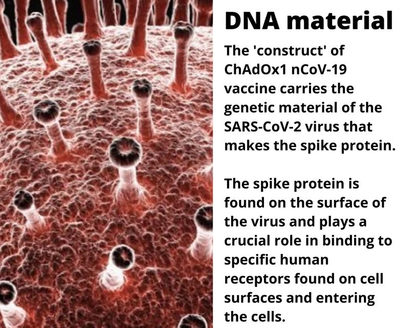 DNA material The 'construct' of ChAdOx1 nCoV-19 vaccine carries the genetic material of the SARS-CoV-2 virus that makes the spike protein.