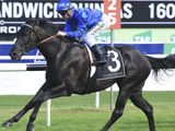 Darley homebred, Kementari will contest the Group 2 Victory Stakes at Brisbane, Australia on Saturday. Courtesy: Godolphin website