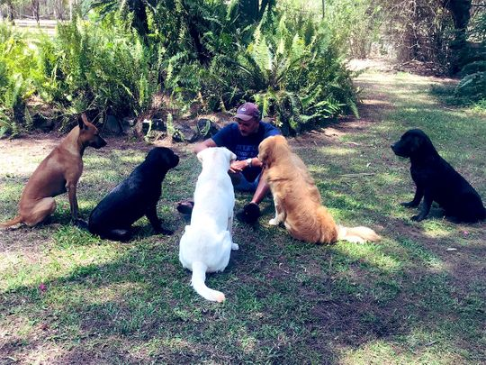 Ravi Shastri's 'social distancing huddle' with dogs wins over internet
