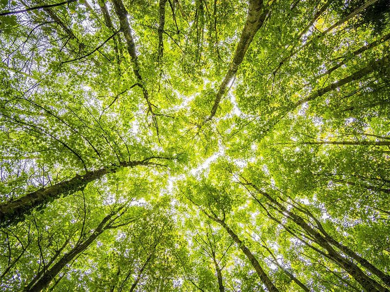 Noise pollution poses long-term risk to trees: Study