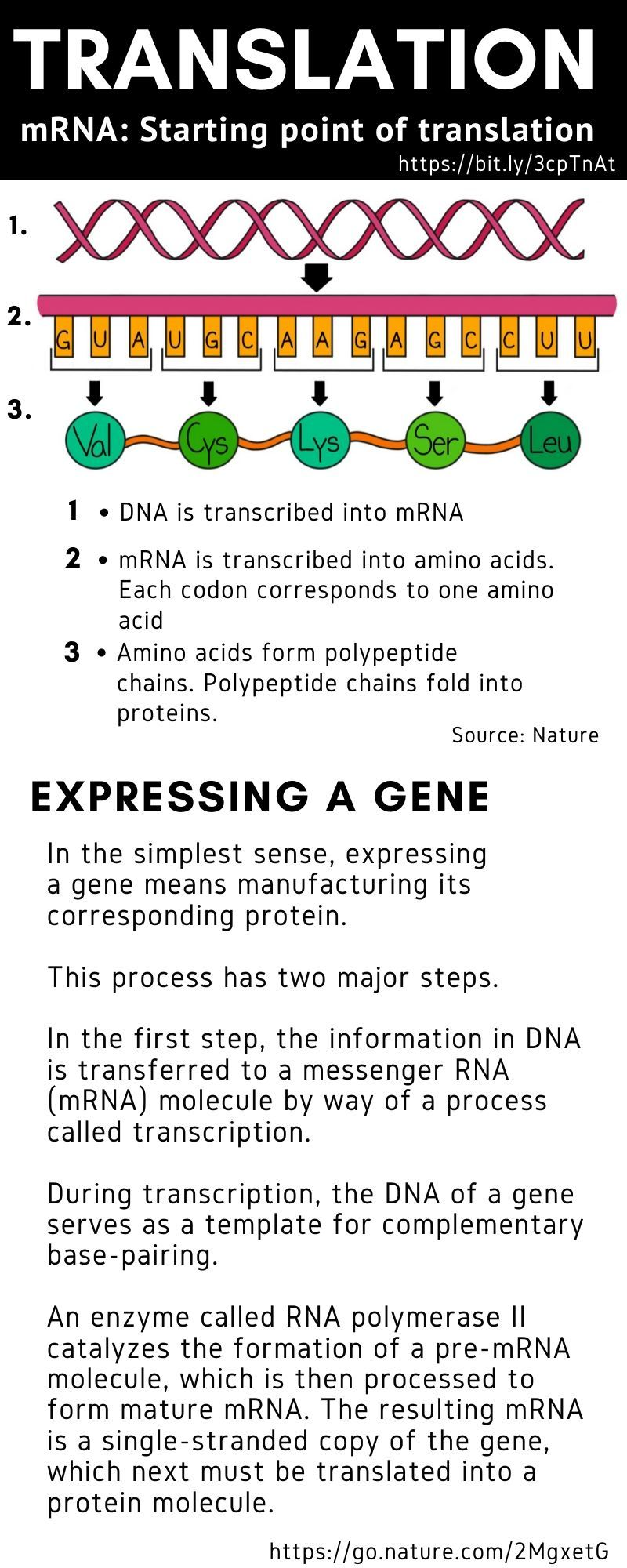 Vaccine mRNA translation