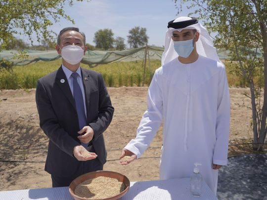 NAT 200603 Minister Al Zeyoudi with Korean ambassador-1591184744843