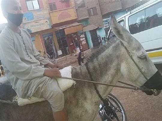 20200604_donkey
