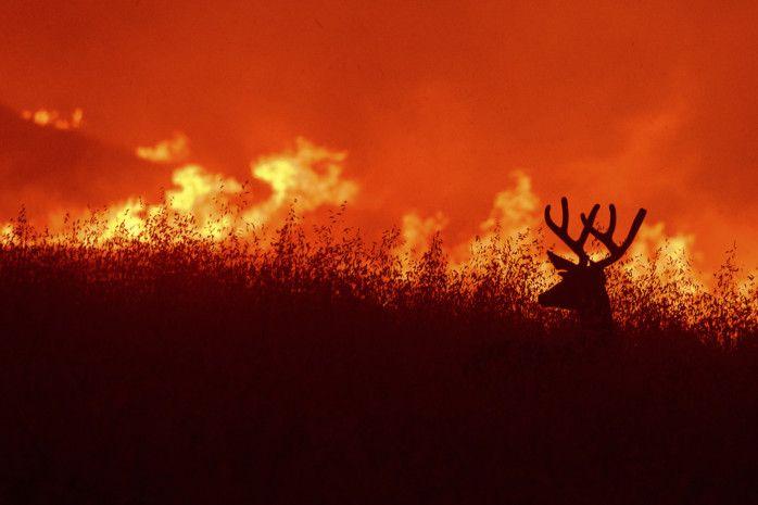 Copy of APTOPIX_California_Wildfires_95137.jpg-ace19-1591697854366