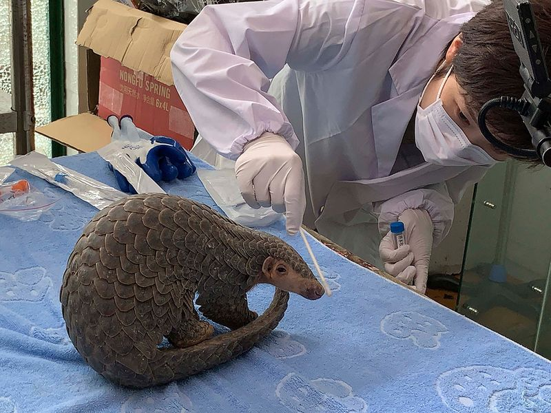 Pangolin gallery