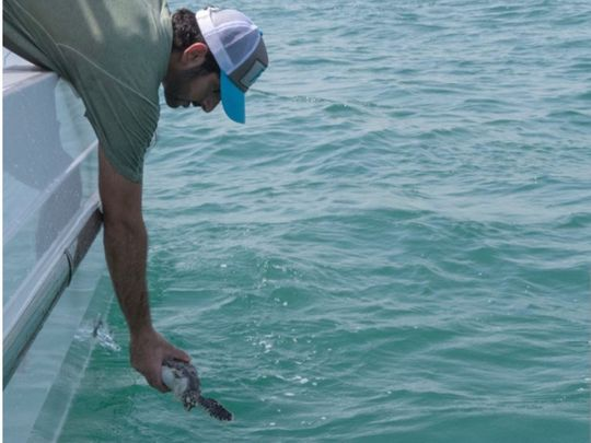 The Dubai Crown Prince shared posts releasing sea turtles in the ocean