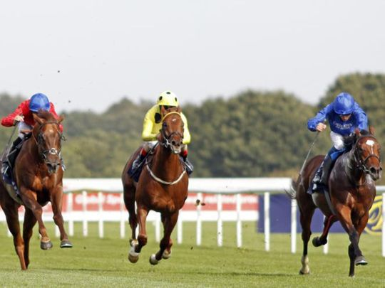 Close second for Royal Crusade in the Group 2 Champagne Stakes at Doncaster last season.